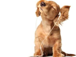Φωτογραφία για Και οι σκύλοι θέλουν τη μουσική τους! Το Spotify έφτιαξε λίστες μόνο για τους τετράποδους φίλους μας
