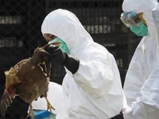 Φωτογραφία για Ουγγαρία: Δεύτερο κρούσμα της γρίπης των πτηνών εντοπίστηκε μέσα σε μια εβδομάδα