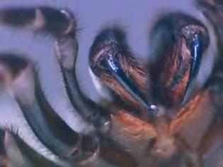 Φωτογραφία για Η Αυστραλία στο έλεος της φύσης: Θανατηφόρες αράχνες απειλούν τώρα την χώρα (ΒΙΝΤΕΟ)