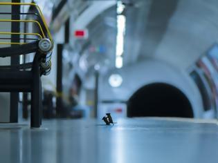 Φωτογραφία για Η καλύτερη φωτογραφία της χρονιάς: Δύο ποντίκια «μαλώνουν» στο μετρό Λονδίνου