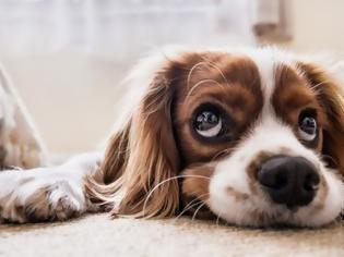 Φωτογραφία για Spotify: Εφτιαξε playlist για τους σκύλους που μένουν μόνοι στο σπίτι