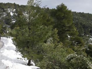 Φωτογραφία για Η μικρότερη χιονοκάλυψη της τελευταίας 15ετίας