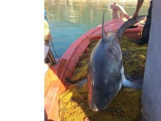Φωτογραφία για Καρχαριοειδές 4 μέτρων αλιεύτηκε στον Παγασητικό