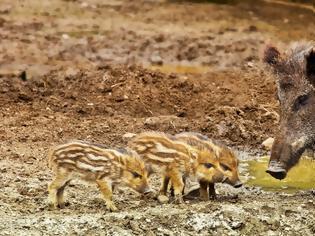 Φωτογραφία για Κοροναϊός: Η Κίνα απαγορεύει προσωρινά την εμπορία άγριων ζώων