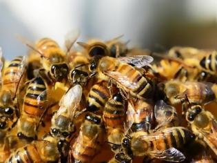 Φωτογραφία για Σ. Σακοράφα: Ερώτηση στη βουλή για τα προβλήματα του κλάδου μελισσοκομίας