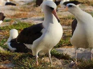 Φωτογραφία για Θαλασσοπούλια οπλισμένα με αισθητήρες για επιτήρηση θαλάσσιων εκτάσεων, εναντίον της παράνομης αλιείας