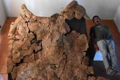 Απολιθώματα γιγάντιας χελώνας ανακαλύφθηκαν στη Νότια Αμερική