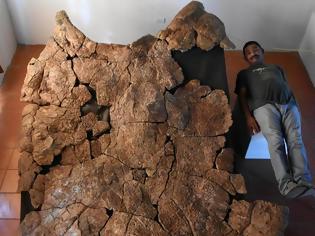 Φωτογραφία για Απολιθώματα γιγάντιας χελώνας ανακαλύφθηκαν στη Νότια Αμερική