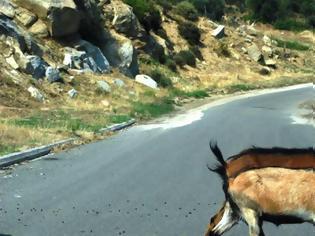 Φωτογραφία για Βοσκοτόπια οι δρόμοι στη νότια Ρόδο