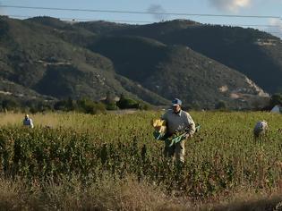 Φωτογραφία για Δουλειές στα χωράφια σε χιλιάδες πρόσφυγες και μετανάστες
