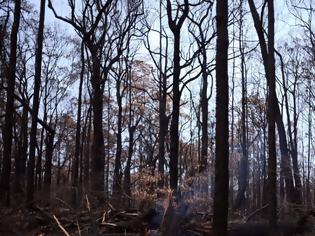 Φωτογραφία για Το 75% των Αυστραλών επηρεάστηκε από τις πυρκαγιές