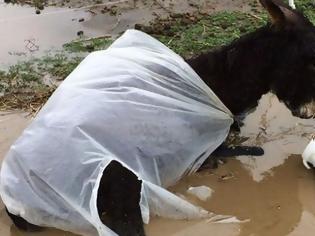 Φωτογραφία για Κως: Παράτησαν γαϊδουράκι μέσα στις λάσπες - Του είχαν δέσει τα πόδια (Photos)