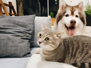 Φωτογραφία για Γαϊδουράγκαθο: Τα οφέλη του για τον σκύλο και τη γάτα
