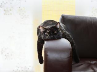 Φωτογραφία για Μια γάτα υποψήφια στις δημοτικές εκλογές