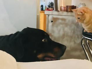 Φωτογραφία για Πόνος στις αρθρώσεις: Τι ανακουφίζει τον σκύλο και τη γάτα
