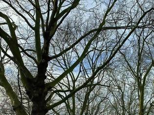 Φωτογραφία για Απείθαρχοι οι Βρετανοί στα νέα μέτρα, έκαναν μπάρμπεκιου σε πάρκα!