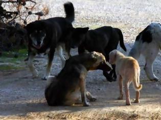 Φωτογραφία για Πέθανε 65χρονος που δέχθηκε επίθεση από αγέλη αδέσποτων σκύλων