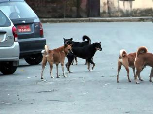 Φωτογραφία για Αγέλη σκύλων επιτέθηκε σε 22χρονο, στο Σέιχ Σου