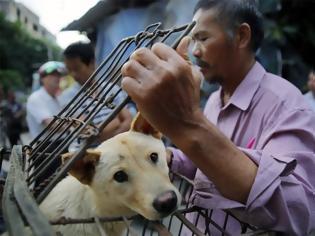 Φωτογραφία για Κίνα: Η Σεντζέν απαγορεύει με «ιστορική απόφαση» την κατανάλωση γατιών και σκύλων