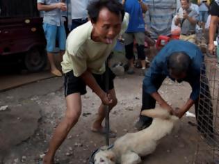 Φωτογραφία για Η Σεντζέν απαγορεύει με «ιστορική απόφαση» την κατανάλωση γατιών και σκύλων