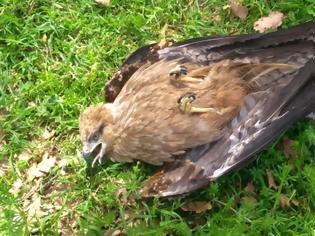 Φωτογραφία για Δεκάδες άγρια πουλιά νεκρά γύρω από τον ΧΥΤΑ Αμαρίου