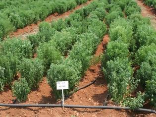 Φωτογραφία για Μεγάλο κίνδυνο για ελλείψεις τροφίμων και ανατιμήσεις φέρνουν τα σοβαρά προβλήματα με τη συγκομιδή των καλλιεργειών