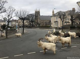 """Φωτογραφία για Τα ζώα """"καταλαμβάνουν"""" τις έρημες, λόγω κορονοϊού, πόλεις"""