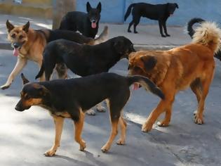 Φωτογραφία για Αγέλη σκύλων επιτέθηκε σε Λαρισαίο – Νοσηλεύεται στο νοσοκομείο με σπασμένα πλευρά