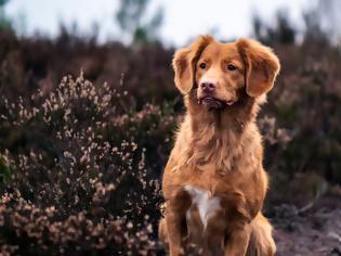 Φωτογραφία για Άγανα: Ο λόγος που η βόλτα στα χόρτα μπορεί να είναι απειλή για τον σκύλο