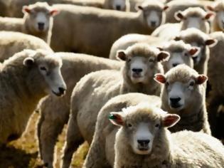 Φωτογραφία για Σε σοβαρό κίνδυνο η κτηνοτροφική παραγωγή της χώρας