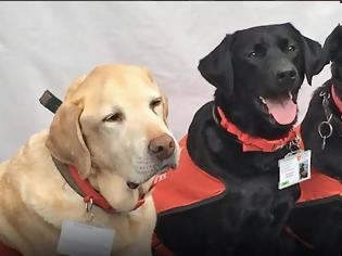 Φωτογραφία για Κι όμως οι σκύλοι περνούν τη δική τους δύσκολη εφηβεία