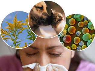 Φωτογραφία για Αλλεργία. Τι είναι και πώς μπορεί να αντιμετωπιστούν οι αλλεργίες; Υπάρχει τρόπος πρόληψης;