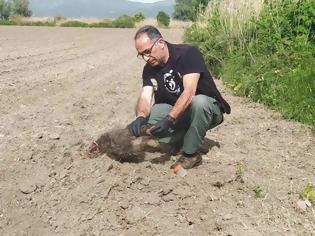 Φωτογραφία για Δύο αρκουδάκια βρέθηκαν θαμμένα σε αγρόκτημα στην Καστοριά