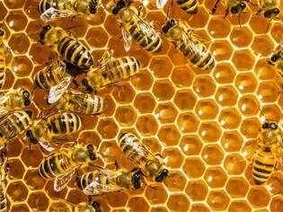 Φωτογραφία για Παγκόσμια ημέρα μέλισσας: Γιατί εξαρτιόμαστε όλοι από αυτές