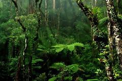 Μελέτη: Τα τροπικά δάση μπορεί να απελευθερώνουν άνθρακα