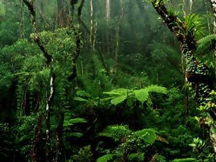 Φωτογραφία για Μελέτη: Τα τροπικά δάση μπορεί να απελευθερώνουν άνθρακα