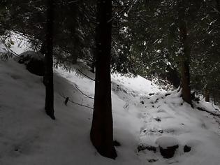 Φωτογραφία για Καιρός:Δεν αποκλείεται ακόμη και να ...χιονίσει την επόμενη εβδομάδα