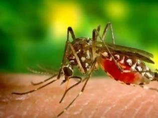 Φωτογραφία για Πελοποννήσος  κρούσματα ελονοσίας λόγω μεταναστών