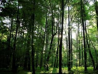 Φωτογραφία για Η κλιματική αλλαγή κάνει τα δέντρα των δασών ολοένα και πιο χαμηλά και πιο νεαρά