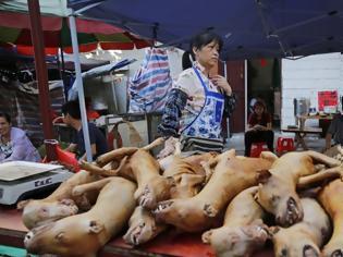 Φωτογραφία για Κίνα: Διοργανώνουν φεστιβάλ κρέατος σκύλου παρά τους νέους κανόνες