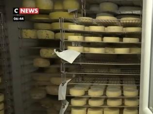 Φωτογραφία για Γαλλία: Κτηνοτρόφος ανακάλυψε νέο τυρί στο lockdown