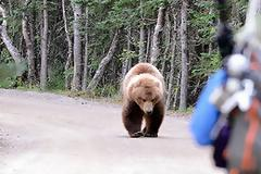Καστοριά: Eπίθεση αρκούδας σε νεαρό - Mε σοβαρά τραύματα στο νοσοκομείο