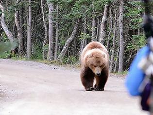 Φωτογραφία για Καστοριά: Eπίθεση αρκούδας σε νεαρό - Mε σοβαρά τραύματα στο νοσοκομείο