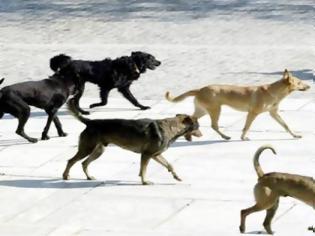 Φωτογραφία για Καστοριά: Τα σκυλιά έσωσαν νεαρό που πάλεψε με αρκούδα!