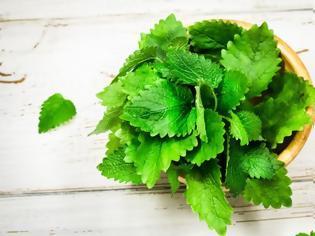 Φωτογραφία για Τα ελληνικά αρωματικά – φαρμακευτικά φυτά είναι superfoods