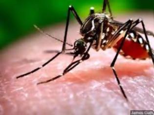 Φωτογραφία για Όλα τα είχαμε ο ιός του Δυτικού Νείλου μας έλειπε