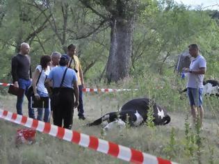 Φωτογραφία για Νεκρές αγελάδες στη Βουλγαρία, λίγα λεπτά αφού ήπιαν νερό από τον Έβρο