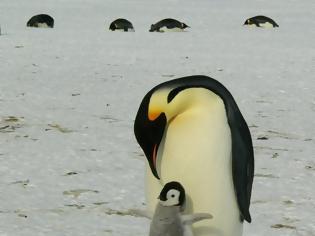 Φωτογραφία για Ανταρκτική: Δορυφόρος ανίχνευσε νέες αποικίες πιγκουίνων από τα...
