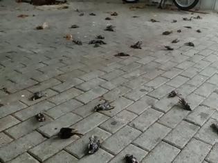 Φωτογραφία για Κακοκαιρία: Απίστευτες εικόνες στη Χαλκίδα με εκατοντάδες νεκρά πουλιά στην παραλία