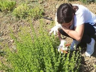 Φωτογραφία για Αργυρώ Κουτσουράδη. Η εταιρεία της «συστήνει» τα χιώτικα αρωματικά φυτά και βότανα σε όλο τον κόσμο